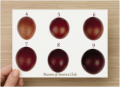 Maran Egg Color Chart