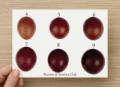 Maran Egg Color Chart