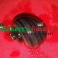 Purple Mystery Snail