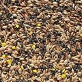 Seed Treat